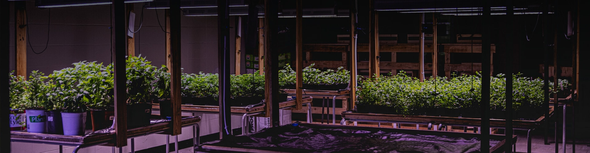 Plants de jardin